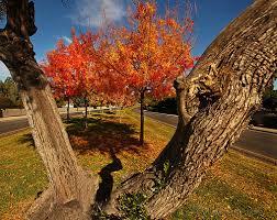 Alan F Schantz fall photo
