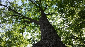 treehighres
